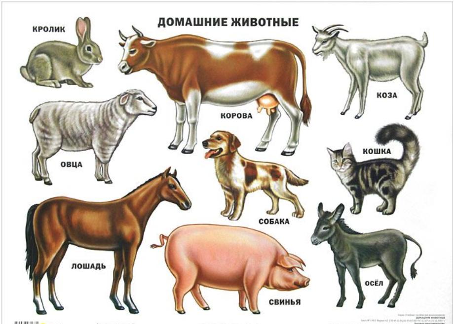 Составлять картинки животных